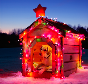 christmas_dog_house